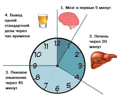 Это важно знать! Через сколько выходит алкоголь из организма?