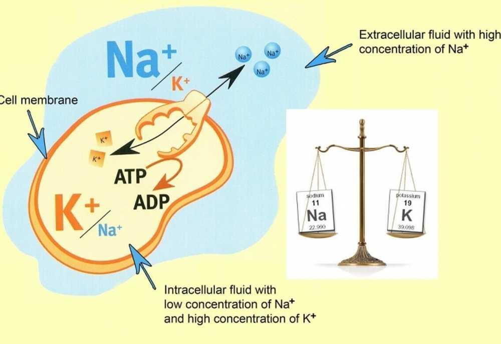 Рекомендуемые ежедневные нормы потребления натрия